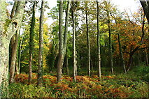 NS2209 : Woodland at Culzean Castle Country Park by Billy McCrorie