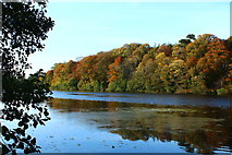 NS2209 : Autumn Colour at the Swan Pond by Billy McCrorie