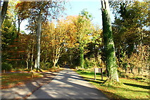 NS2209 : Autumn at Piper's Brae, Culzean by Billy McCrorie
