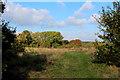 TQ4676 : On East Wickham Open Space by Chris Heaton