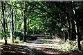 TQ4676 : Green Chain Walk on East Wickham Open Space by Chris Heaton