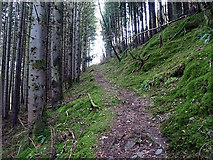 SN7377 : Near the top of the ascent of the path through Coed Rheidol by John Lucas