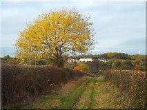 NZ3356 : Autumn colour near Sunderland by Malc McDonald