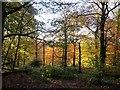 SD7014 : Woodland in Autumn by Philip Platt
