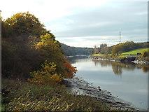 NZ3356 : River Wear near Washington by Malc McDonald