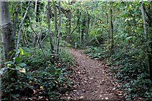 TQ4475 : In Oxleas Wood by Chris Heaton