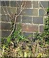 SK7929 : Bench mark, railway bridge near Eaton by Alan Murray-Rust