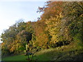 TQ5460 : Autumnal woods seen from Magpie Bottom by Marathon