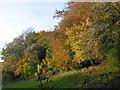 TQ5460 : Autumnal woods seen from Magpie Bottom by Marathon