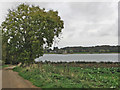 SK9206 : Near the end of the Hambleton Peninsula by John Sutton