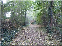 SX9490 : Path through woodland by the Southbrook estate, Countess Wear, Exeter by David Smith