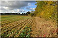 SP6938 : Autumn hedge looking towards Akeley Woods Farm by Philip Jeffrey