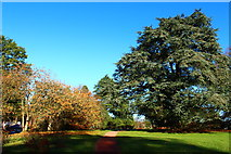 NS5420 : Autumn Colour at Dumfries House Estate by Billy McCrorie