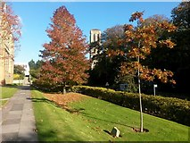 SZ0891 : Bournemouth: autumn colour alongside the Town Hall by Chris Downer