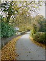 SX2677 : Autumn leaves on the road at Trebartha by Rod Allday