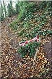 SX9364 : Remains of seat, Bishop's Walk by Derek Harper