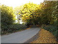 TL2015 : Codicote Road, Ayot St.Lawrence by Adrian Cable