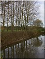 SE8242 : Pond near Thorpe-le-Street by Paul Harrop