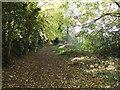 TL1614 : Lea Valley Walk Bridleway to Batford Mill by Geographer