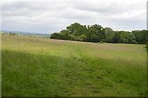 TQ5445 : Rough Ten Acres by N Chadwick