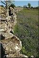 SX7476 : Dry stone wall, Emsworthy by Derek Harper