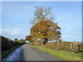SP4222 : Road from Glympton towards Sandford St. Martin by Robin Webster