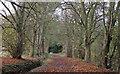 TQ5292 : Bridleway in Bedfords Park, Havering-atte-Bower by Roger Jones
