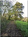 SO6051 : Track and footpath, Little Cowarne by Philip Halling