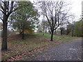 SJ8945 : Fenton Park: wildlife area by Jonathan Hutchins