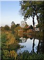 TQ0356 : Broadmead Cut by  Papercourt Meadows, November by Stefan Czapski