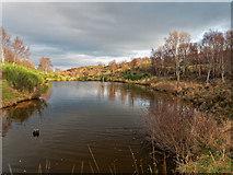 NH6751 : Pond in Craigiehowe Wood by valenta