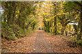 SX0367 : Camel Trail by Guy Wareham