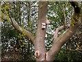 TQ7818 : Nest boxes in oak tree by Patrick Roper