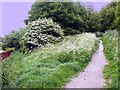 TQ8310 : Clive Vale footpaths by Patrick Roper