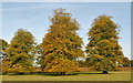 ST8280 : Centre Walk Avenue, Acton Turville, Gloucestershire 2015 by Ray Bird