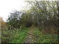 SJ8350 : Bradwell Woods by Jonathan Hutchins
