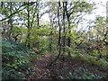 SJ8450 : Bradwell Woods by Jonathan Hutchins