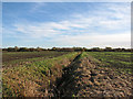 TL3269 : Autumn-sown fields north of Fenstanton by John Sutton