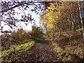 SJ8849 : Sneyd Hill Park by Jonathan Hutchins