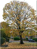 SZ0795 : Northbourne: a bike parked under an autumn tree by Chris Downer