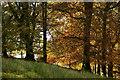 NY1101 : Autumn at Santon Bridge by Peter Trimming