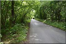 TQ5043 : Lane through the woods by N Chadwick