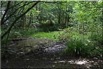 TQ5044 : Marshy pond, The Slips by N Chadwick