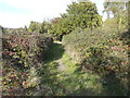 TQ7569 : Footpath off Saxon Shore Way by John Baker