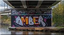SJ8196 : Amber by Peter McDermott