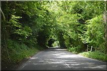SU8214 : B2141, Chilgrove Hill by N Chadwick