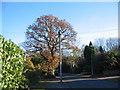 SP3176 : Oak, Cannon Hill Road by E Gammie