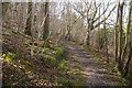 SO4281 : Path, Sallow Coppice by Richard Webb