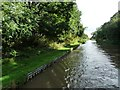 SJ6458 : Middlewich Branch, between bridges 5 and 6 by Christine Johnstone