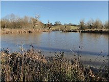 SO8845 : Pool in Croome Park by Philip Halling